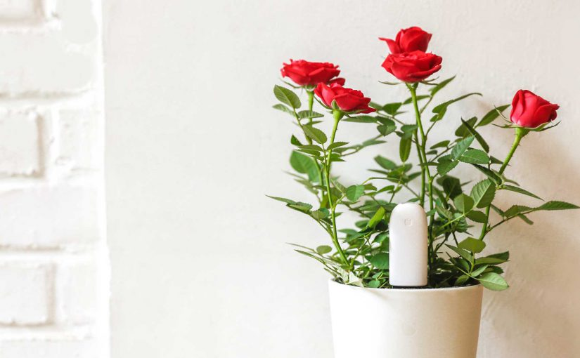 Step-by-step setup for the Xiaomi Plant Flower Care